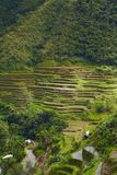 Terraces on the hill Royalty Free Stock Images