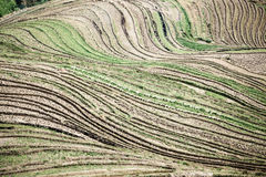 Terraces lines Royalty Free Stock Image