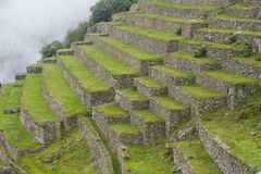 Terraces at Machu Picchu. Agricultural terraces on slopes of Machu Picchu Stock Images