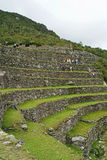 Terraces at Machu Picchu, Peru Royalty Free Stock Photography