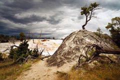 Terraces Mammoth Hot Springs Yellowstone National Park Royalty Free Stock Images