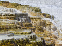 Terraces at Mommoth Hot Springs, Yellowstone Royalty Free Stock Images
