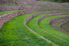 Terraces at Moray, Sacred Valley, Peru. Green terraces at Moray, near Maras, Sacred Valley of Incas, Peruvian Andes Royalty Free Stock Photography