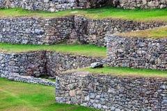 Terraces on mountain of Machu Picchu Royalty Free Stock Photos
