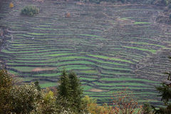 Terraces Royalty Free Stock Photography