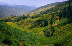 Terraces and  mountains. A multicolored rice terrace in china mountaines Royalty Free Stock Photos