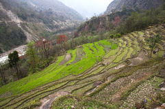 Terraces - Nepal Stock Images