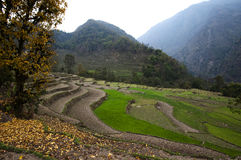 Terraces - Nepal Royalty Free Stock Images