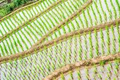 Terraces Stock Photo