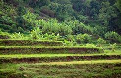 Terraces. Side Sea Lake, Gia Lai, Viet Nam Stock Photo
