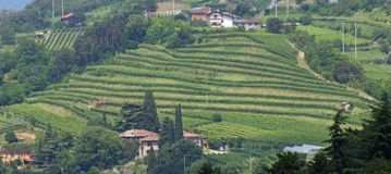 Terracing for cultivation of the vine in a hill in Italy Stock Photos