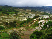 Terracing da arroz-almofada de Yunnan foto de stock