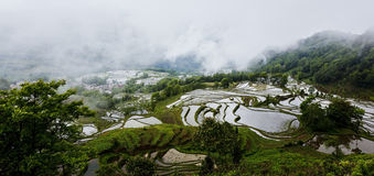 Terracing da arroz-almofada de Yunnan fotografia de stock royalty free
