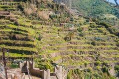 Terracing montanhoso para a agricultura imagem de stock royalty free