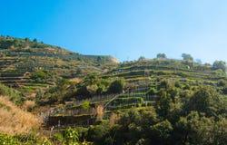 Terracing montanhoso para a agricultura com muitos apoios de madeira para vegetais crescentes fotografia de stock