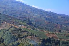 Terracing is a technique of planting in the highlands. Like in this Dieng plateau stock photo