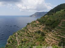 Cinque Terre - Vernazza. Terracing in Vernazza, Cinque Terre national park, La Spezia, Liguria, Italy. You can see vines and olive trees royalty free stock image