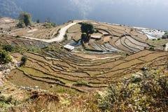 Terracings на треке базового лагеря Annapurna, Непал Стоковое Изображение RF