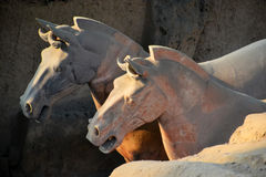 Terracota Horse. The Terracotta Army is a collection of terracotta sculptures depicting the armies of Qin Shi Huang, the first Emperor of China Royalty Free Stock Photo