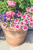 Terracotta container with Beautiful pink summer flowers: roses and verbena. Stock Image
