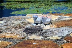Terracotta figures of ducks sitting on stone wall. Garden statues of pair of ducks near pond. Garden decoration accessory Stock Images