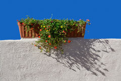 Terracotta flower pot Stock Image