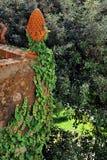 Terracotta garden design element with ivy Stock Photo