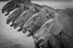 Terracotta horses in Xian China Stock Photo