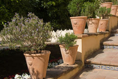 Terracotta plant pots Royalty Free Stock Photography
