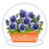 Terracotta Planter with Sky Blue Pansies. Arrangement of colorful sky blue spring pansies and buds growing a favorite Mexican flowerpot. EPS8 organized in Royalty Free Stock Photos