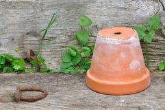Terracotta pot on board Stock Image