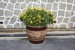 Terracotta pot of yellow daisies Stock Photos