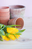 Terracotta pots and yellow tulips. Spring potting and gardening concept. Yellow tulip flowers and collection of terracotta pots ready for potting stock images