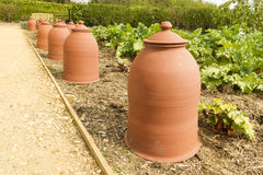 Terracotta rhubarb forcing pots in a row. Forcing pots for rhubarb, Rheum rhabarbarum, made from Terracotta Royalty Free Stock Images