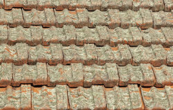 Terracotta Roof Tiles Covered in Lichen Fungus Stock Image