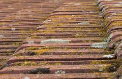 Terracotta roof tiles with moss giving nice texture Stock Images