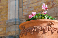 Terracotta vase Royalty Free Stock Photo