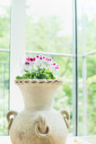 Terracotta vase or flowers pot with lovely geranium flowers over window background, home decoration Stock Images