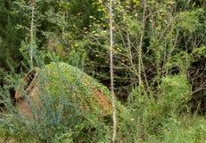 Terracotta water urn in overgrown deserted garden royalty free stock image