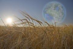 Terraformed Luna seen from field Stock Image