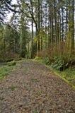 Terrain de camping dans Smith River Rec Area photos stock