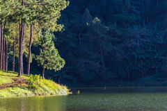 Terrain de camping sous des arbres en parc national de la Thaïlande Photos libres de droits