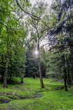 Terrain de chasse de forêts dans le village du mezirici de Velke dans Photos libres de droits