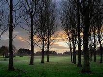 terrain de golf à l'aube Photographie stock libre de droits