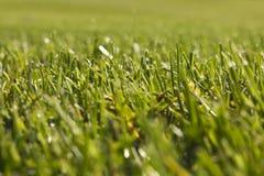 Terrain de golf dans Belek Herbe verte sur la zone Photos stock