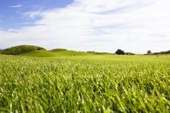 Terrain de golf dans Belek Herbe verte sur la zone Ciel bleu, ensoleillé Photographie stock