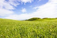 Terrain de golf dans Belek Herbe verte sur la zone Ciel bleu, ensoleillé Images stock