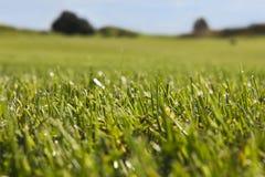 Terrain de golf dans Belek Herbe verte sur un champ Ciel bleu, DA ensoleillé Photo stock