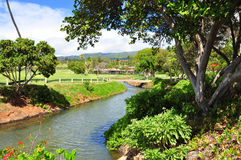 Terrain de golf dans Kaanapali Maui, Hawaï Photos libres de droits
