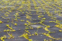 Terrain de jeu avec les tapis en caoutchouc (panneaux) pour la sécurité Long-abandone Photos libres de droits